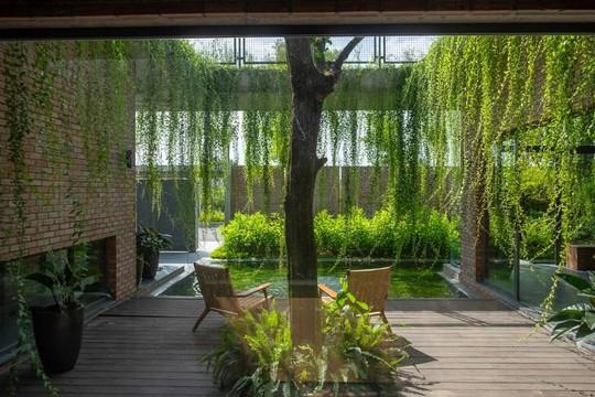 Ngôi nhà gạch thô ở Quảng Ninh có rèm cây xanh bao phủ