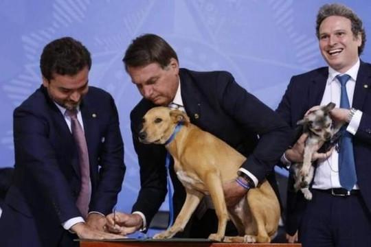 Tổng thống Brazil ban hành luật chống ngược đãi động vật trước sự chứng kiến của chú chó cưng