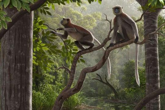 Phát hiện hóa thạch khỉ 6,4 triệu năm tuổi bên ngoài châu Phi