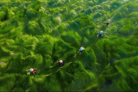 Aerial Photography Awards 2020: Việt Nam có 4 giải nhiếp ảnh