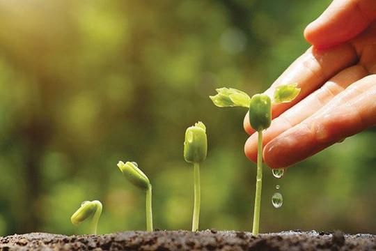 Nhiều khó khăn trong thực hiện chiến lược tăng trưởng xanh ở Việt Nam