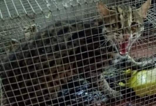 Công khai rao bán động vật hoang dã trên mạng xã hội