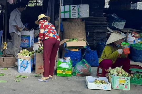Đưa quả vú sữa Cần Thơ về Tiền Giang 'hô biến' thành Lò Rèn Vĩnh Kim