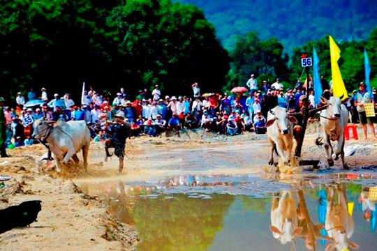 An Giang: Tổ chức biểu diễn dù lượn và đua bò tại Phụng Hoàng Sơn