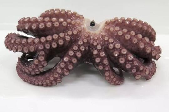 Phát hiện bạch tuộc 9 tay hiếm ngoài khơi Nhật Bản