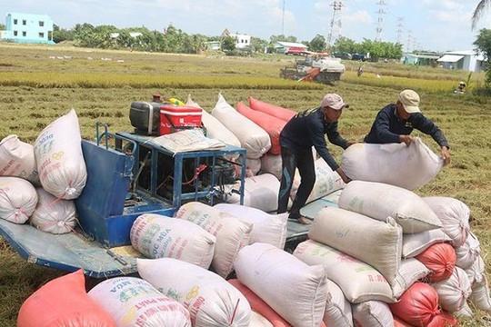 Năm 2020, Việt Nam xuất khẩu 6,15 triệu tấn gạo