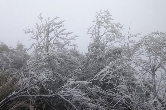 Nhiệt độ tại Bắc Bộ giảm sâu, nguy cơ mưa tuyết ở vùng núi cao