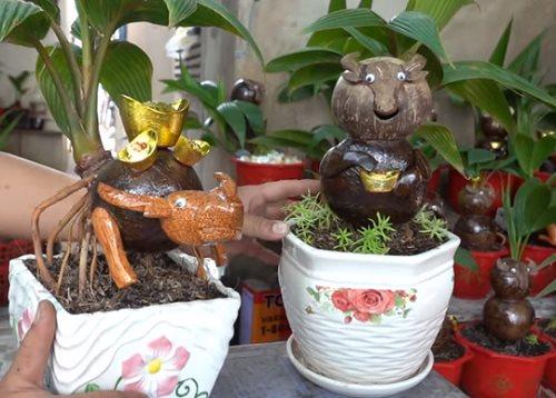 Tết Tân Sửu 2021: Độc đáo dừa bonsai trâu cõng vàng vào nhà