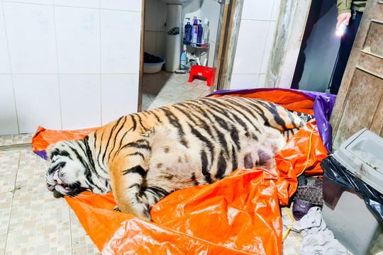 Công an phát hiện con hổ nặng 250kg đã chết, chủ nhà nói gì?