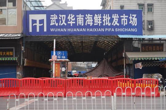 Nhóm chuyên gia WHO tới chợ hải sản Hoa Nam nơi bùng phát COVID-19