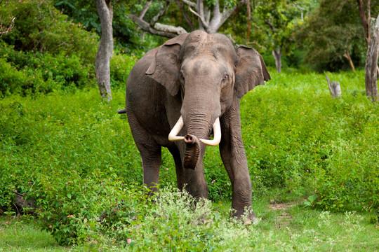 Bắt gặp khoảnh khắc hiếm có khi voi châu Á trò chuyện và chia sẻ thức ăn