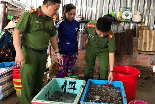Cà Mau: Kẻ thu gom 659kg tôm sú tạp chất bị phạt trên 70 triệu đồng