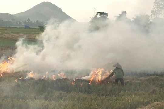 Xử lý nghiêm việc đốt rơm rạ không đúng quy định, gây ô nhiễm không khí