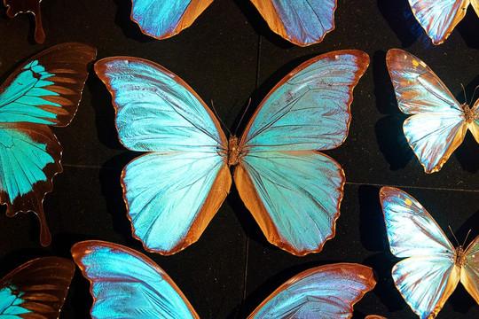 Màu tinh khiết - Tương lai của nghệ thuật bảo vệ môi trường