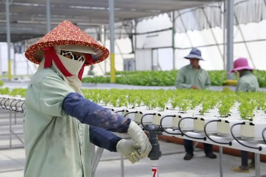 Doanh nghiệp công nghệ Israel thâm nhập thị trường nông nghiệp Đông Nam Á