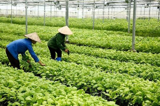 Khuyến khích các doanh nghiệp đầu tư, ứng dụng công nghệ cao vào lĩnh vực nông nghiệp