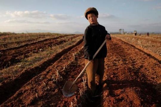 Báo Nga: Triều Tiên phải mở kho gạo khẩn cấp giải quyết khủng hoảng lương thực