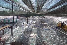 Mô hình nuôi tôm công nghệ cao phát triển mạnh trong mùa dịch