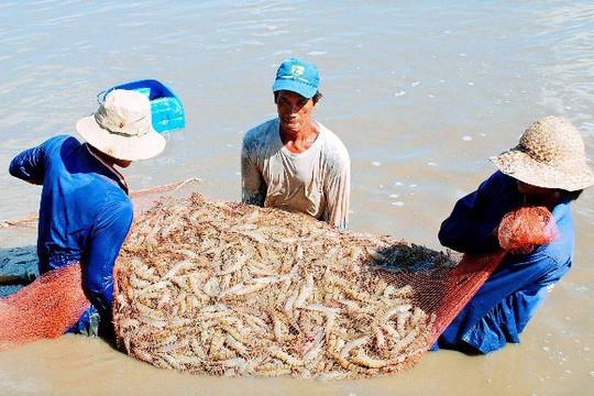 Hội nghề cá kiến nghị Bộ NN-PTNT tháo gỡ khó khăn cho ngành tôm