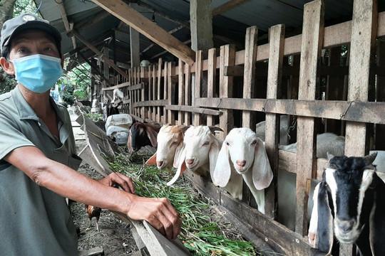 Tiền Giang: Một gia đình nông dân bị nhiễm COVID-19 và câu chuyện tình người trong đại dịch