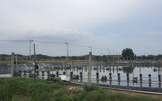 EVNHCMC hoàn thành hệ thống lưới điện phục vụ nuôi trồng thuỷ sản công nghệ cao tại Cần Giờ